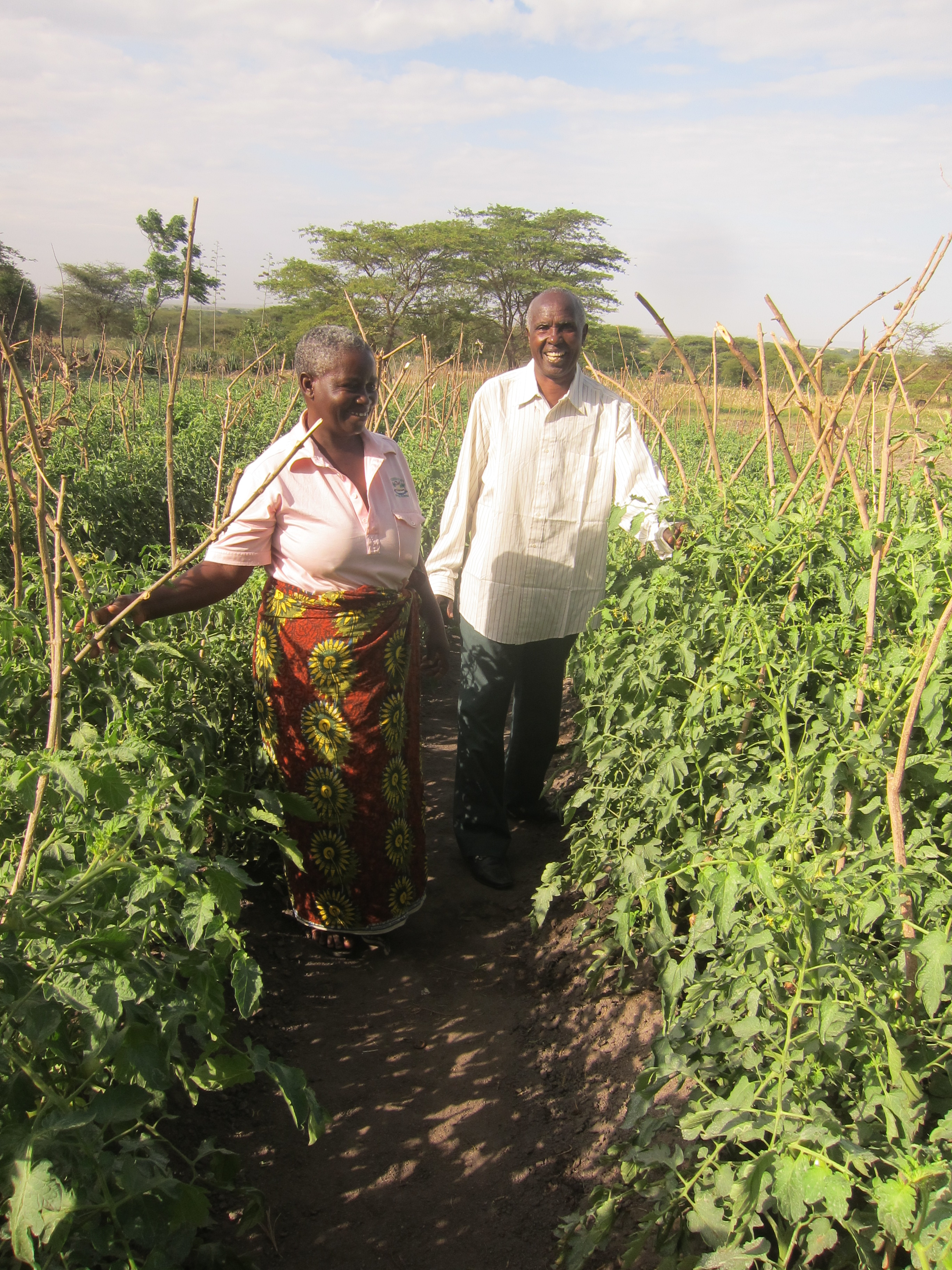 Increased family income through vegetable gardens  image