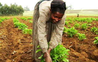 Improving the lives of small scale farmers Image